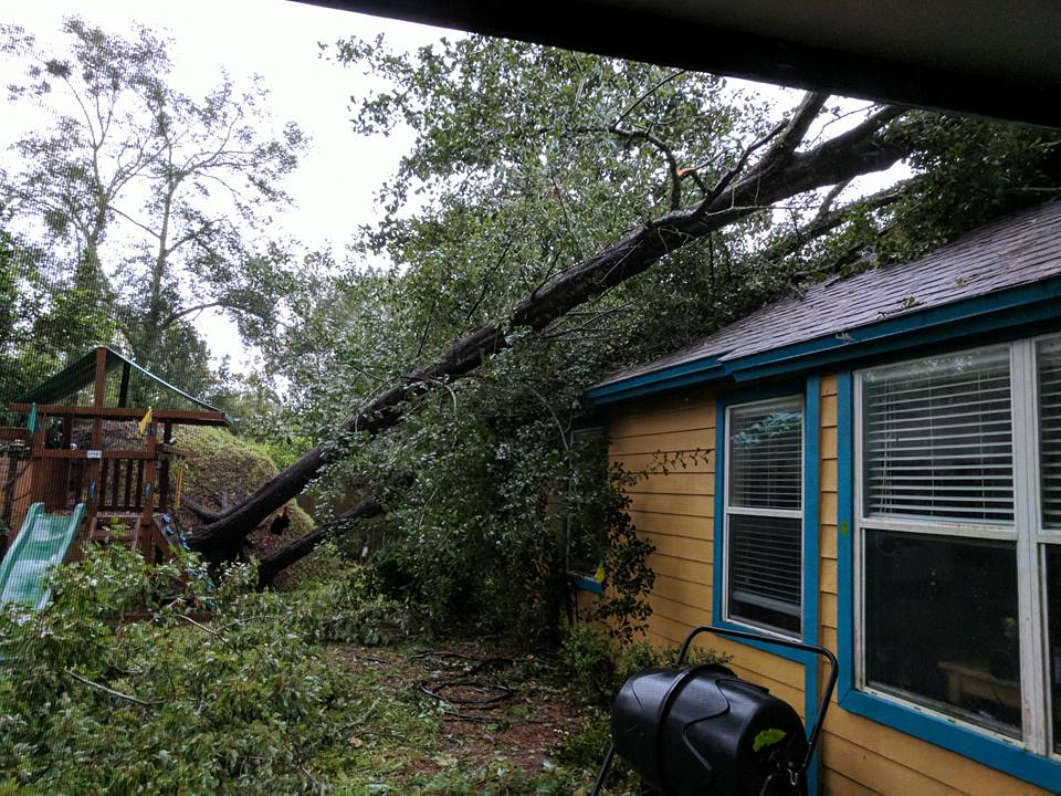 Two trees leaning on our roof